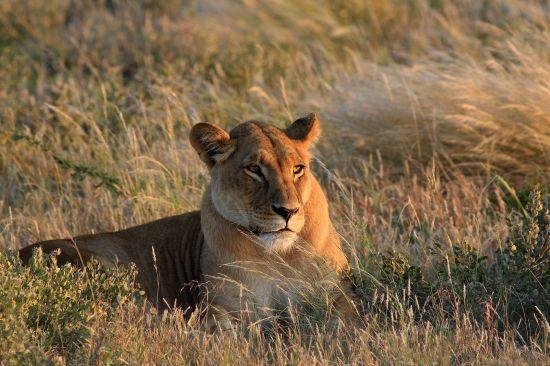 Vacanza in sudafrica per vedere gli animali evolution travel for Sud africa immagini